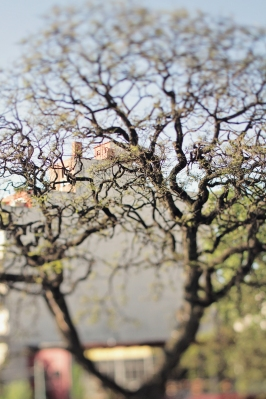 Beautiful Acacia trees everywhere!